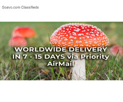 Dried Fly Agaric Mushrooms | Online Shop