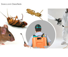 Best Pest Control Service in Western Massachusetts